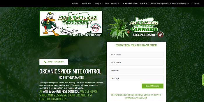 Are you facing the problem of plants destroyed by spiders? Check to get rid of them